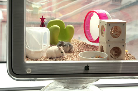Der Apple Designer Hamster